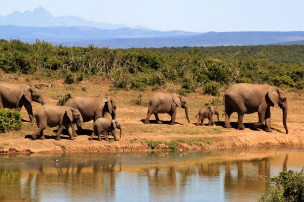 WildWoobinda safari e viaggi esotici