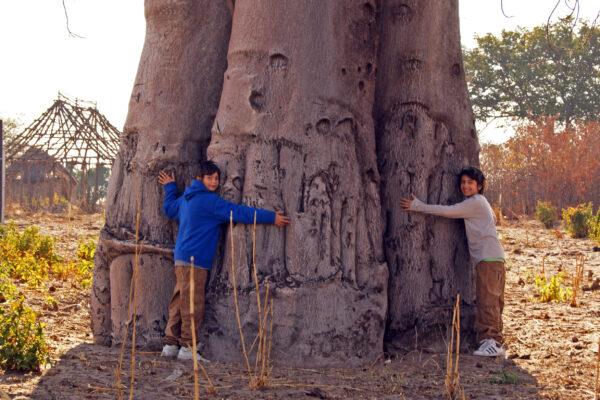 Samu Baobab