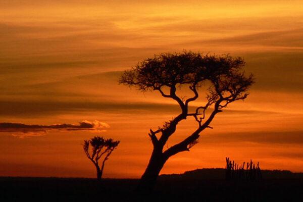 WildWoobinda safari e viaggi esotici Tramonto Africa